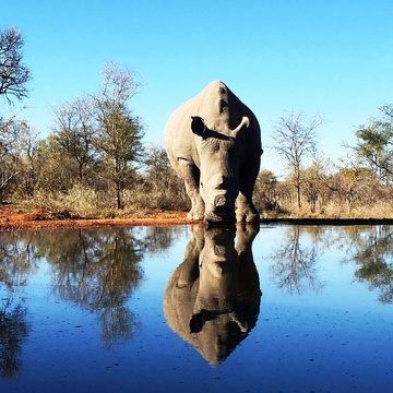 Top Safari Parks in Africa - Kruger National Park discount safari packages at Indlovu River Lodge