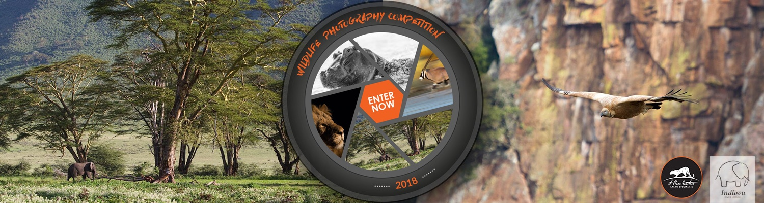 wildlife photography competition 2018 indlovu river lodge at close quarters