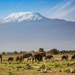 John Haley - Ellies of Amboseli