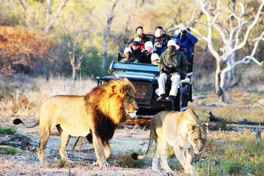 Best Luxury wildlife safari Kruger Park - Indlovu River Lodge