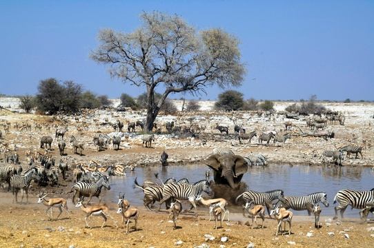 Etosha - top safari parks in Africa