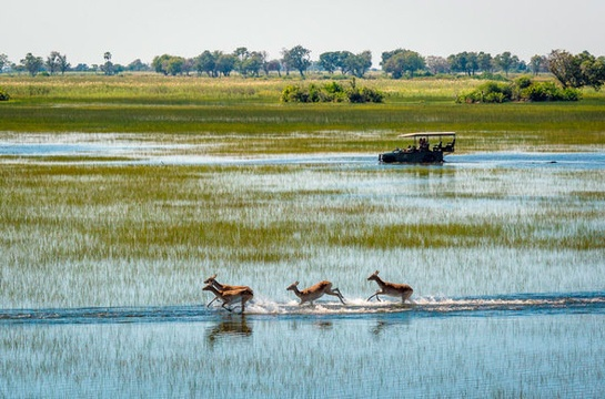 Okavango Delta - Top safari parks in Africa