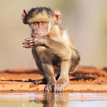 wildlife photography from photographic hide at Indlovu River Lodge in Greater Kruger Park