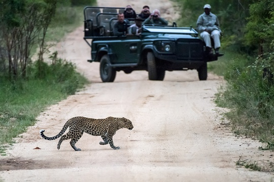 Kruger National Park - top safari parks in Africa
