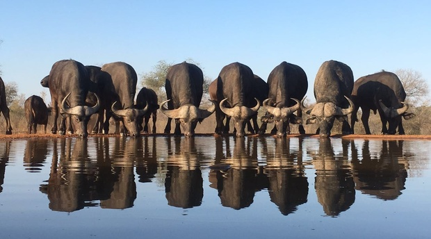 wildlife photography safari from sunken hide in kruger park south africa