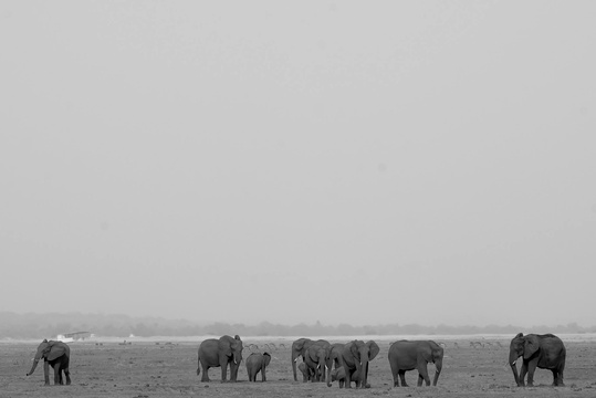 Warren Horsman - Elephants on the Chobe